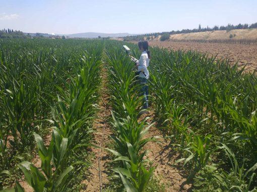 Field report 29/06/20 – Μετρήσεις αγρού