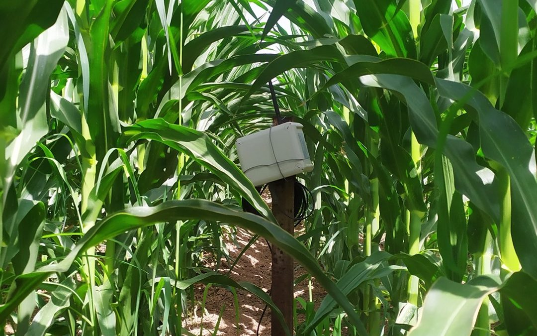 Ευφυής Γεωργία: Χρήση αισθητήρων αγρού για την παρακολούθηση περιβαλλοντικών συνθηκών στα πειραματικά αγροτεμάχια